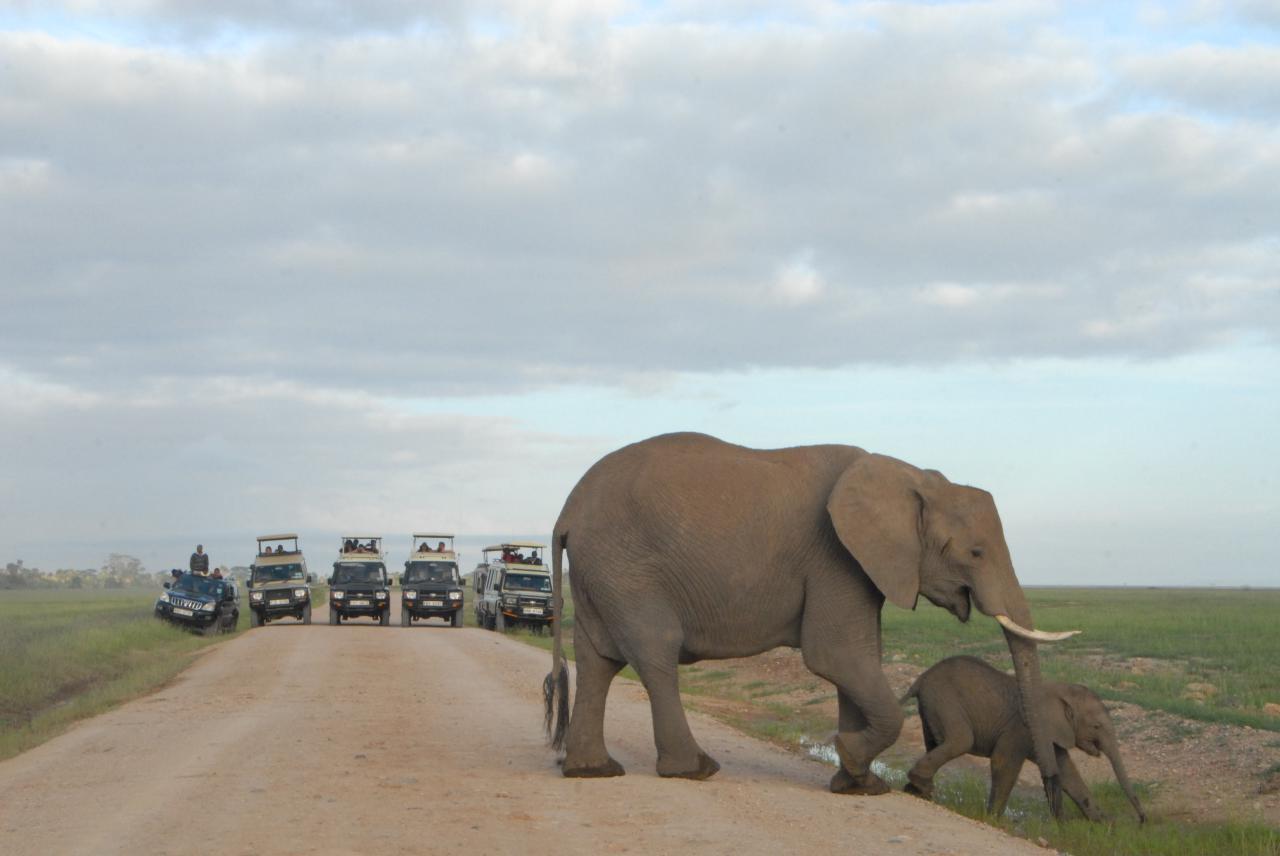 Amboseli National Park in Kenya – Chingu Safari